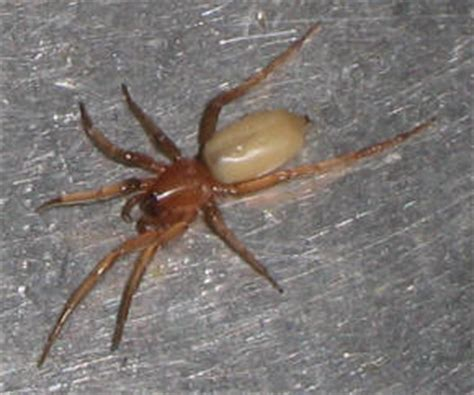 pictures small house spiders house pictures