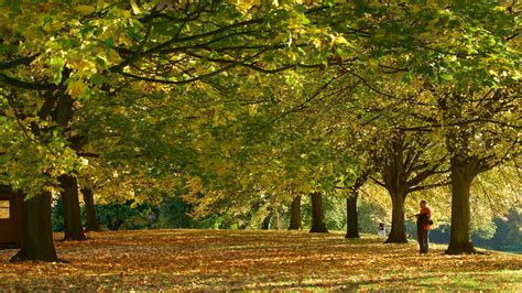 kensington garden kensington gardens pictures view photos images of