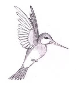 hummingbird drawing hummingbird by phantomxfan on deviantart