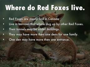Where Does Live Foxes By Jackson By Jadajackson46