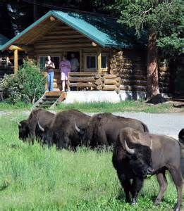 lodging in yellowstone yellowstone park lodging