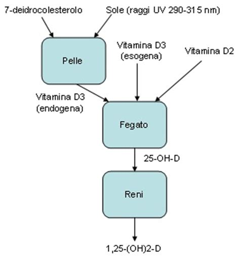 alimenti ricchi di vitamina d3 l importanza della vitamina d