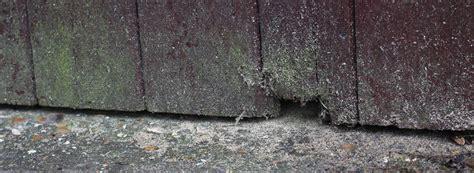 maeuse im haus garten oder auf dem dachboden