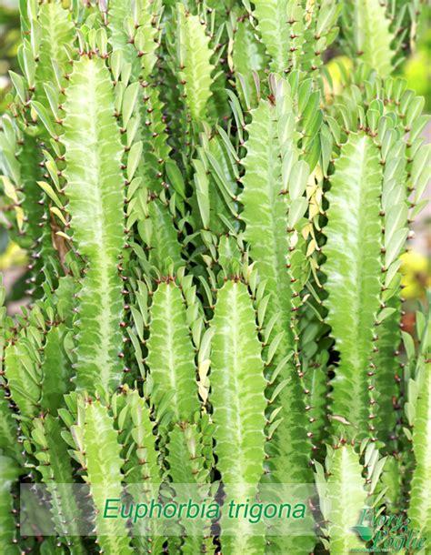 nomi e fiori nomi piante e fiori liceo classicou201caristossenou201d