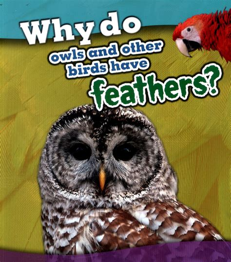why do owls and other birds have feathers by beaumont
