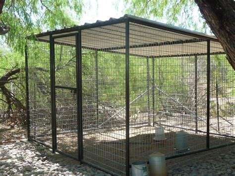 outdoor bird aviary give  freedom   feathered