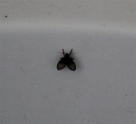 insetti da casa che insetto 232 pestforum