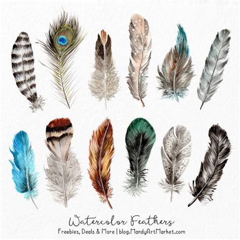 water color feather watercolor feathers clipart watercolour feathers