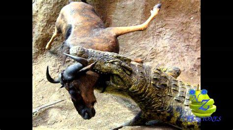 imagenes animales peligrosos ataques de animales peligrosos 5 youtube
