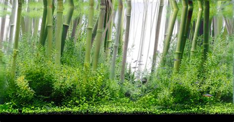 Bamboo Aquascape by