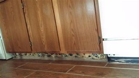 toe kick under kitchen cabinets no toe kick under the kitchen cabinets picture of