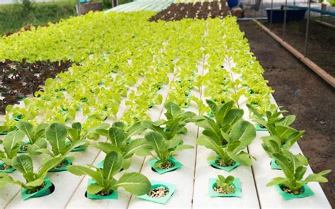 hydroponic gardening systems beginners garden ftempo