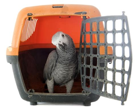 travel cage bird travel cages bird cages