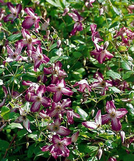 Garten Pflanzen Schatten by Kletterpflanzen Pflanzen Pflege Und Tipps