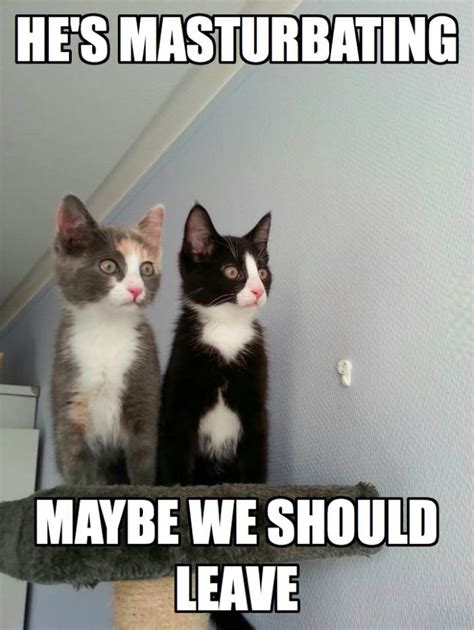 Scared Cat Meme - scared cats