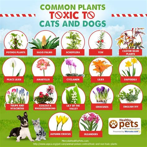house plants that are poisonous to dogs house plants toxic to dogs 28 images plants poisonous for humans images pretty