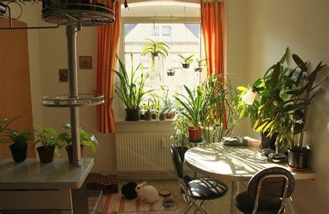 indoor plants indirect sunlight best indoor plants according to different light conditions