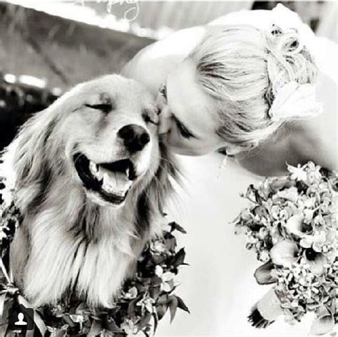 Best 25  Dog wedding ideas on Pinterest