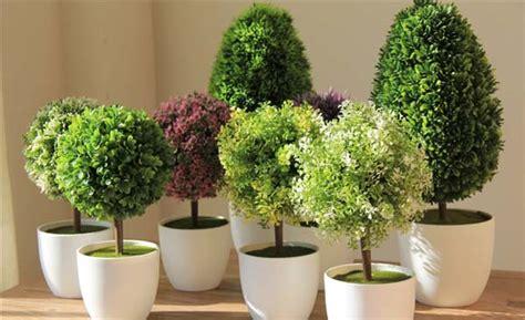 decoracion de plantas decoraci 243 n c 243 mo decorar con plantas y flores artificiales