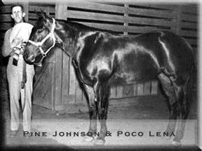poco len horses cutting horses quarter horses