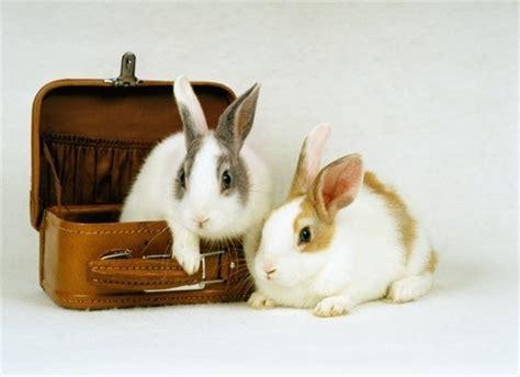 kaninchen haltung wohnung die artgerechte haltung kaninchen in der wohnung