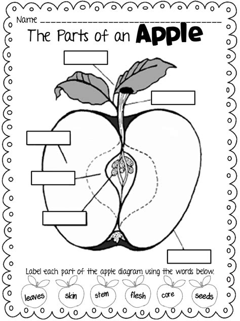 apple diagram forkin4th freebie parts of an apple