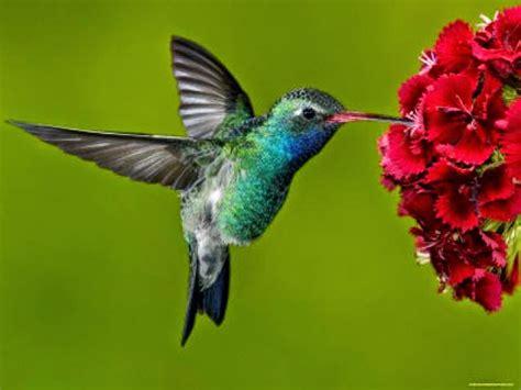 imagenes de casitas y bebedero p colibri con botellas descartables abundancia amor y plenitud el colibri