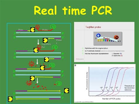 pattern classification real time classificationof bacteria