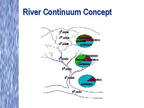 What Is Concept by River Continuum Concept