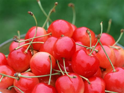 images of fruit cherry fruit wallpaper fruit wallpaper 6333997 fanpop