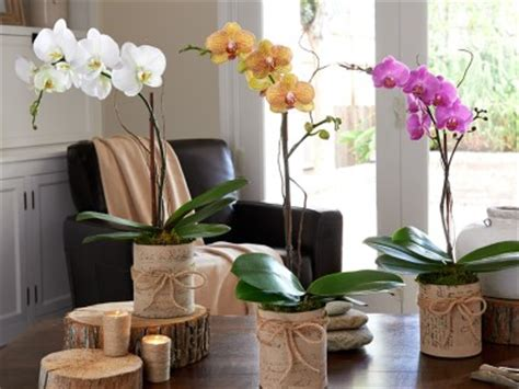 Hadiah Unik Bunga Berpengawet Pot Putih Bunga Dalam Pot inspirasi gaya tanaman di teras smartmama