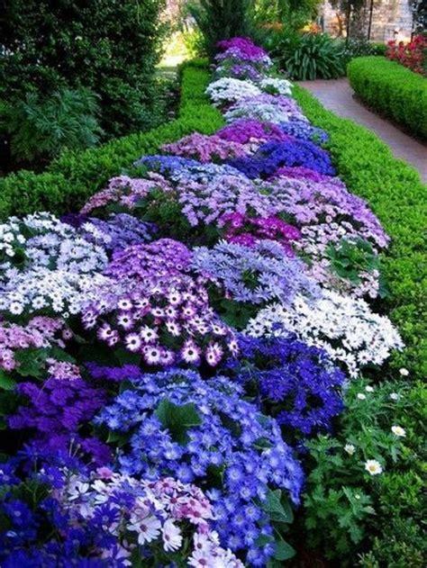 best 25 ground cover plants ideas on pinterest