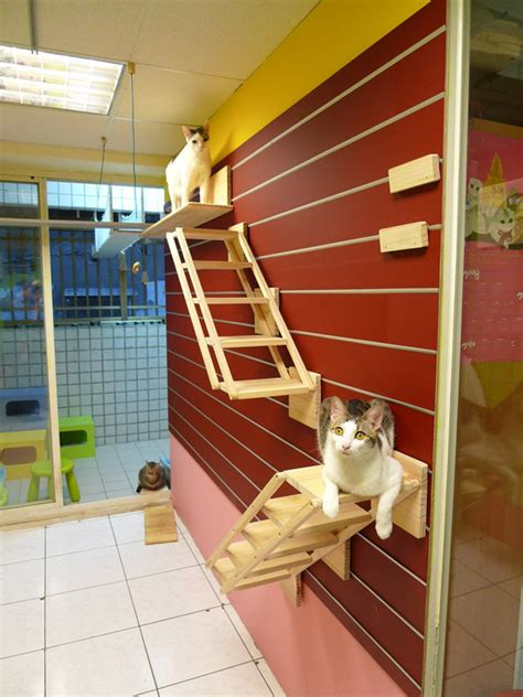 catswall  modular cat climbing wall perfect   pet