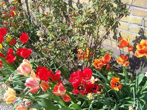 Image Flower Garden Flowers Gardening Wallpaper 1183537 Fanpop