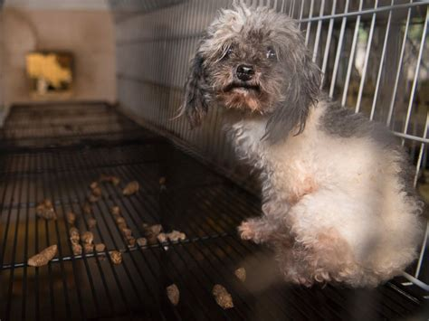 yates puppy mill 128 animals rescued from suspected puppy mill in