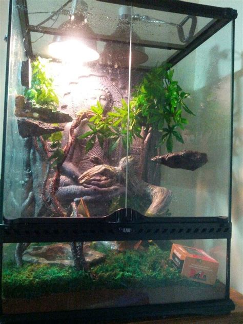 anole with a fire belly toad and a tree frog in a jungle terrarium terrariums pictures and