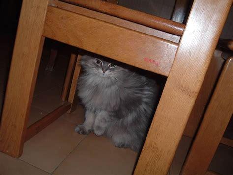 sotto il tavolo la principessa