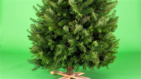 11 sustainable christmas tree choices sunset magazine