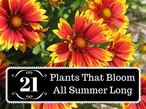 21 plants that bloom all summer