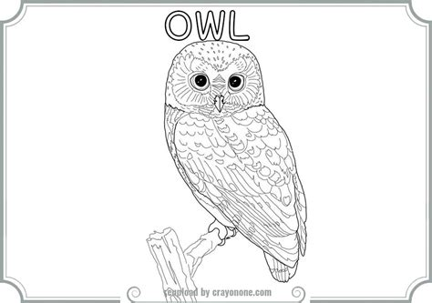 owl butterfly coloring page printable coloring pages for woodsy owl printable best