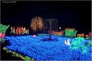 Botanical Gardens Bellevue Lights Just Visiting Puget Sound Wa Bellevue Botanical Garden D Lights