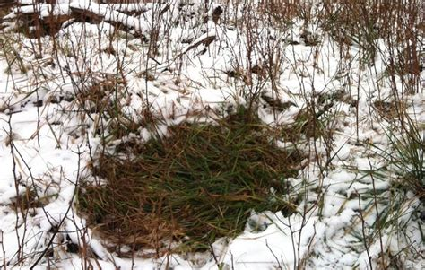 how to find deer bedding areas sign in the snow winchester blog