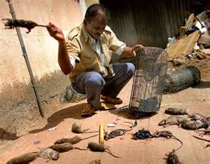 gabalie g 233 vaudan loz 232 re les rats maudits