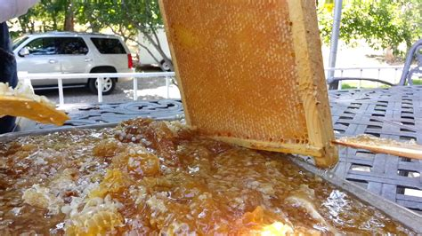 how to extract honey from a top bar hive harvest honey from beehive cheap easy way youtube