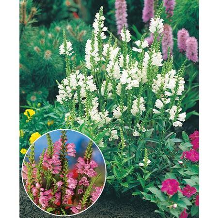 Que Planter En Septembre by Que Planter En Septembre Guide Complet