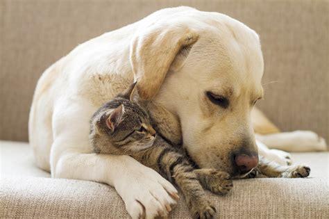 pet care wellness care for pets archives springbrook animal care center springbrook