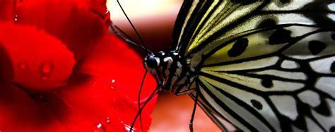 insetti volanti insetti volanti elenco e caratteristiche animali volanti