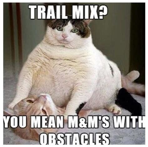 Funny Fat Memes - funny fat cat trail mix you mean m m s with
