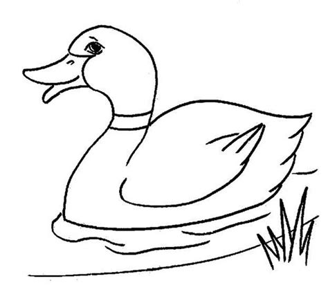 Coloring Pictures Of Ducks by Duck Picture Coloring Page Netart