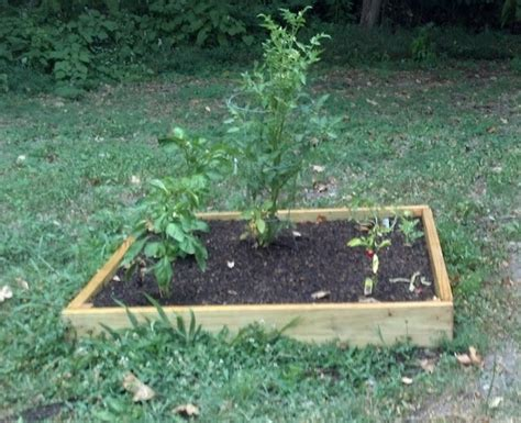how to plant a vegetable garden in your backyard diy gardening how to plant vegetables in your garden julia palosini